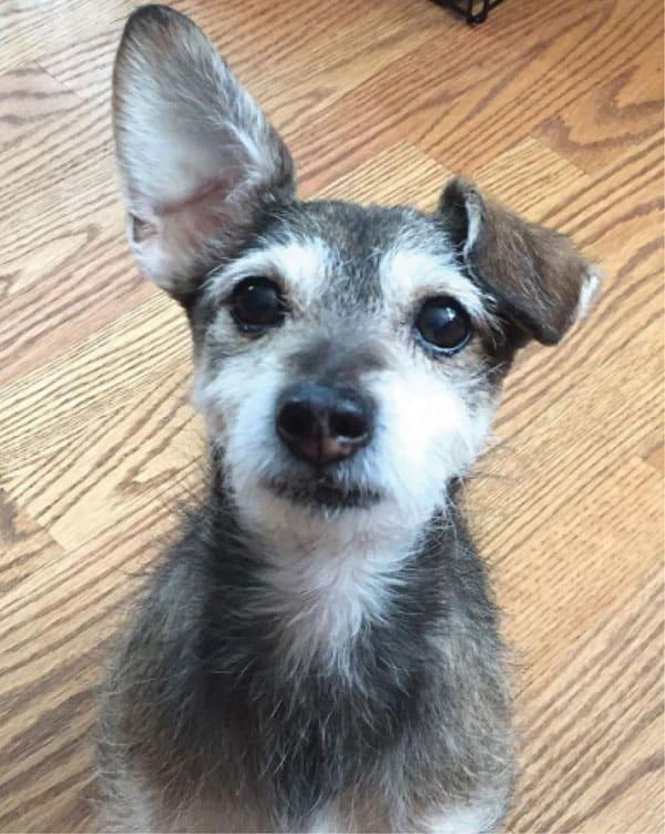 Henry the terrier